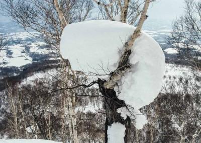 Experience Japow Ski-Snowboard-113