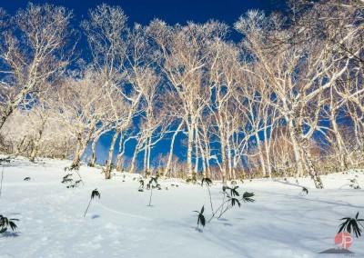 Experience Japow Ski-Snowboard-139